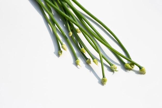 Цветок чеснока или китайский зеленый лук изолированные