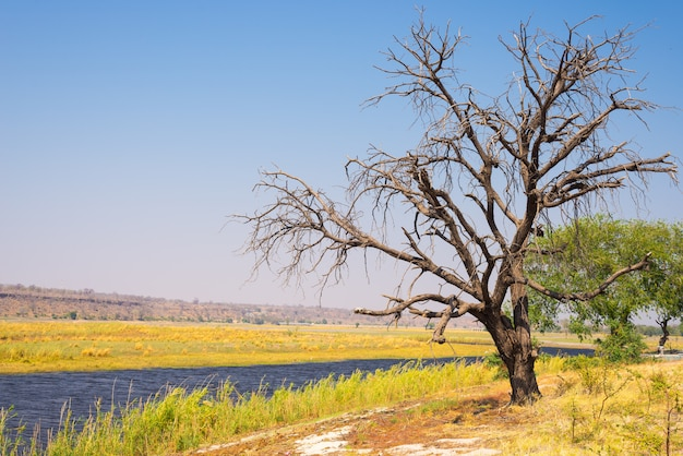 Chobe river landscape, view from caprivi strip on namibia botswana border, africa. chobe national park, famous wildlilfe reserve and upscale travel destination.