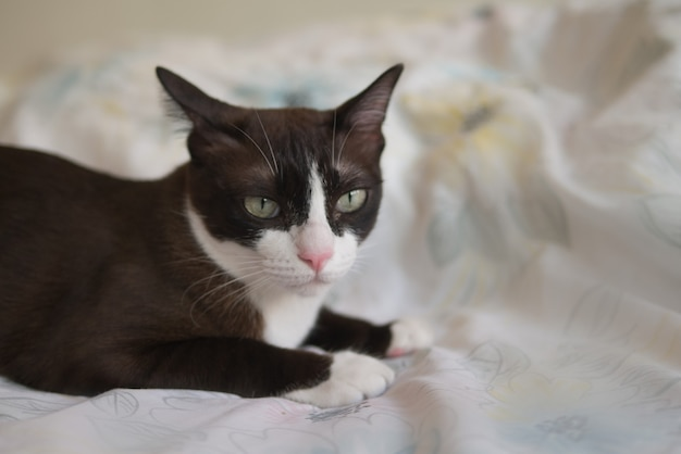 Шоколадно-коричневый котенок с белой маской смотрит на что-то на кровати как на домашнее животное