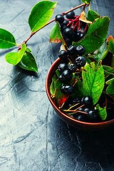 약초의 초크 베리 열매