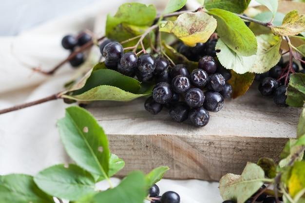 Ветка черноплодной рябины на деревянной доске на белом фоне