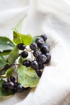 Ветка черноплодной рябины с листьями на светлом фоне