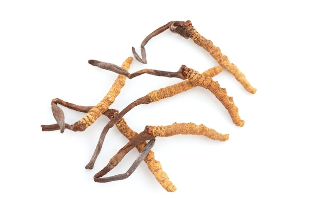 Chong cao or cordyceps sinensis isolated on white background with clipping path.top view,flat lay.