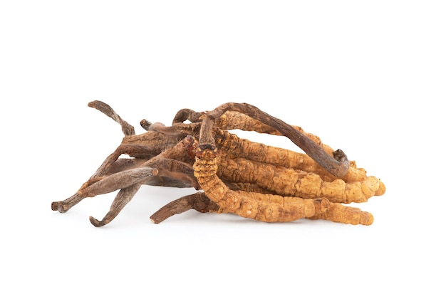 Chong cao or cordyceps sinensis isolated on white background with clipping path.