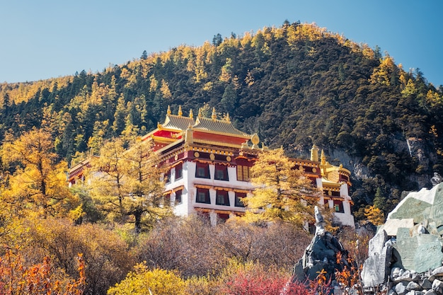 Chong gu monastery shining in autumn pine forest at yading nature reserve