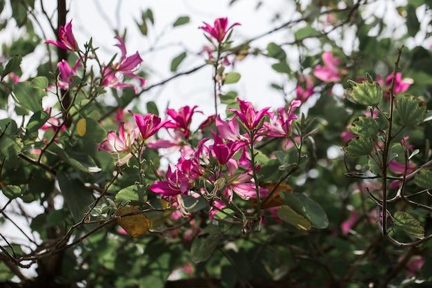Chongkhoは木の上に花を咲かせる。