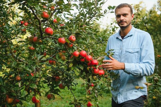 Выбираем самые лучшие яблоки. счастливый молодой человек-фермер протягивает руку к спелому яблоку и улыбается, стоя в саду
