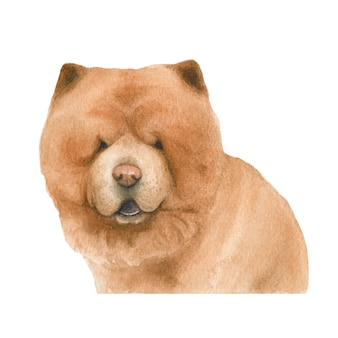 Chow chow dog watercolor illustration