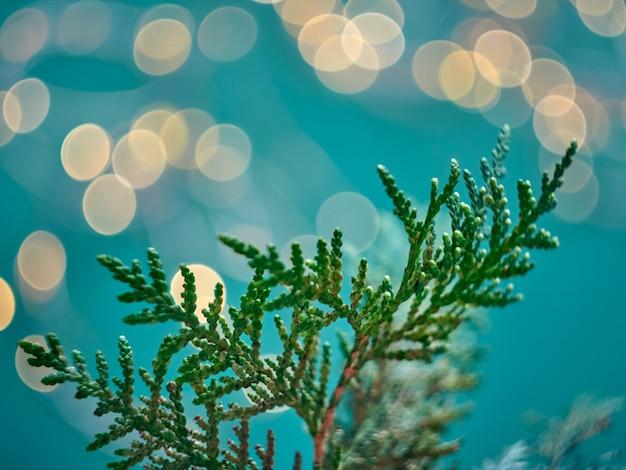 クリスマスの抽象的なボケ味の背景とthujaの枝。クリスマスのあかり。