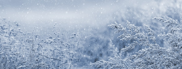雪に覆われた植物の背景に大雪とクリスマスと新年の背景
