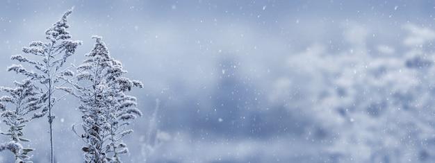 降雪時にぼやけた背景に雪に覆われた植物とクリスマスと新年の背景。冬の風景