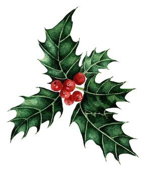 クリスマスと新年のシンボルホリーと赤いベリー伝統的なお祭りの水彩イラスト