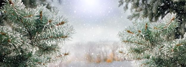 降雪時にふわふわのモミの木とクリスマスの背景。クリスマスムード