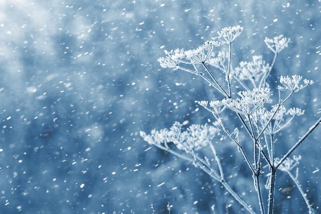 Новогодний фон с заснеженными сухими растениями во время снегопада