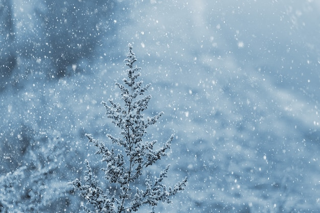 Christmas background with snowfall and snow-covered dry vegetation in the foreground, winter mood