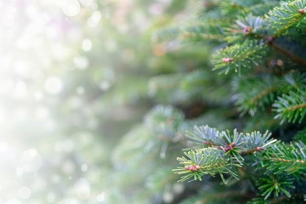 눈 덮인 나뭇 가지와 크리스마스 배경