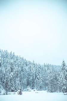 Christmas background with snowy fir trees, beautiful winter mountain landscape