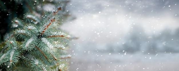 降雪、パノラマの間に森の背景にトウヒの枝とクリスマスの背景