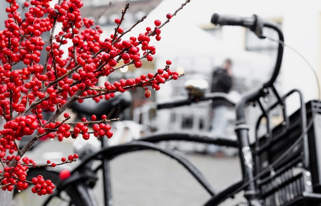 Christmas berry holly or ilex twigs and traditional netherlands bike with box outside. amsterdam urban winter street with christmas decoration outdoor. european new year holidays. long web banner