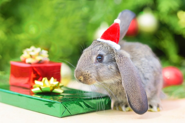 빨간 모자에 크리스마스 토끼입니다. 녹색 배경에 빨간 산타 클로스 의상을 입은 토끼 - 동물, 애완 동물, 새해 개념. 카피스페이스. 2022년