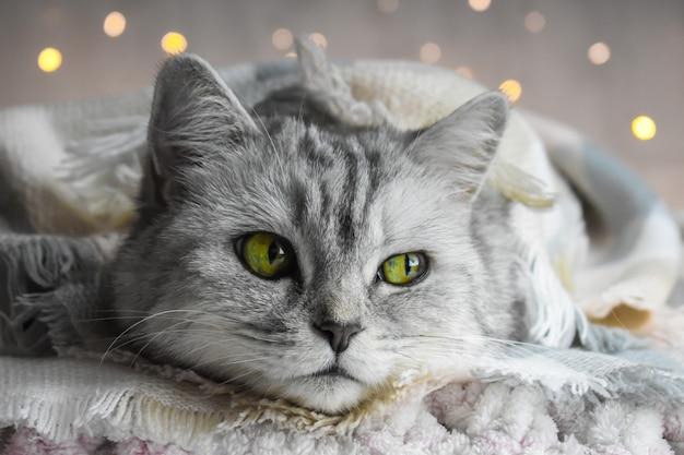 ライトの背景に縞模様の猫とクリスマスカード