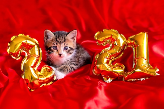 Christmas cat 2021. kitty with gold foil balloons number 2021 new year. striped kitten on christmas festive red background.