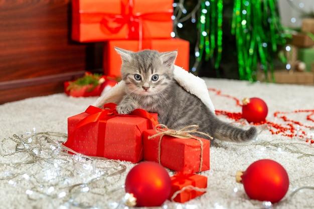 Рождественский кот рождественский подарок концепция полосатый котенок в шапке санта-клауса