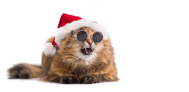 サングラスをかけている赤いサンタクロースの帽子のクリスマス猫。感情的な猫。