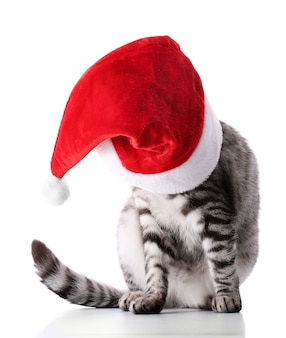 Christmas cat isolated