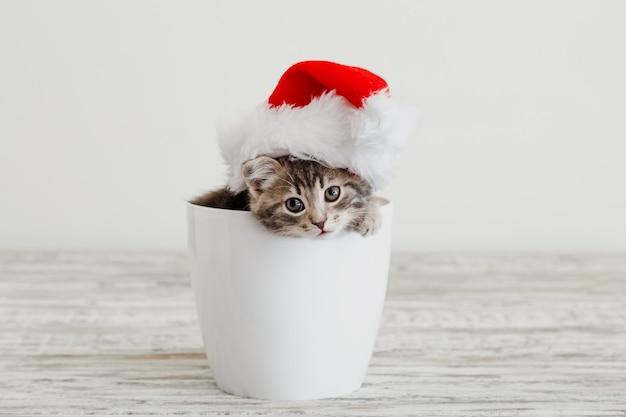 Рождественский котенок в шляпе санта-клауса. новогодний серый полосатый котенок в белом горшке с копией пространства.