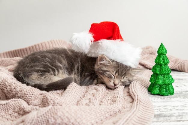 Рождественский котенок в шляпе санта-клауса спит возле миниатюры елки. новогодний серый полосатый котенок кошка спит на розовом пледе.