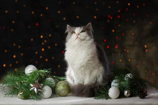 クリスマスの猫はクリスマスのおもちゃや花輪と木の表面に横たわっています
