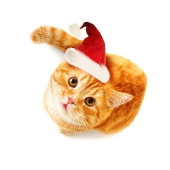 흰색 배경(상위 보기)에 올려다 크리스마스 고양이