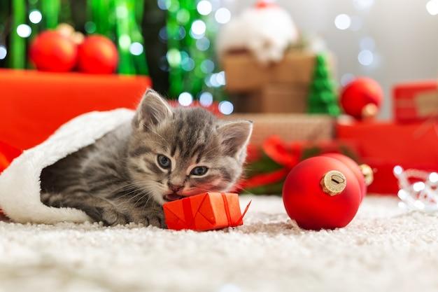 クリスマスの猫はギフトボックスのぶち子猫と遊ぶ