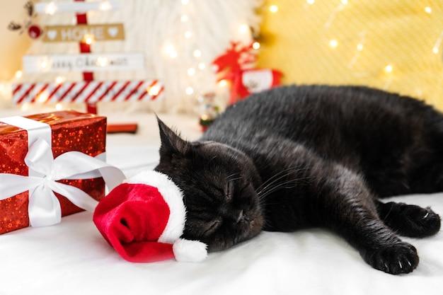 ギフト用の箱で眠っているクリスマス猫