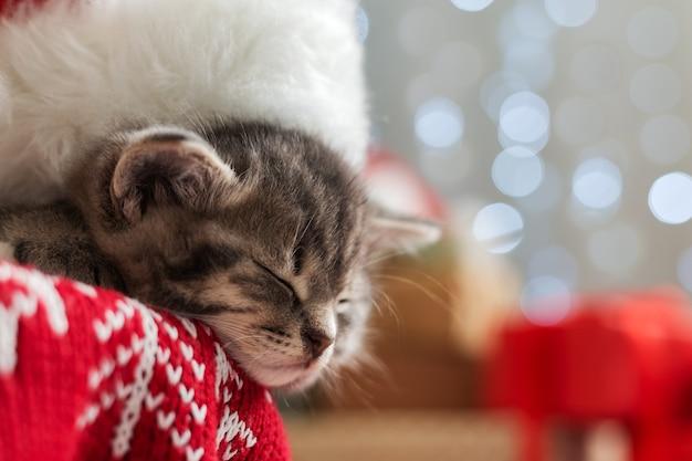 ぼやけたお祭りの装飾とクリスマスツリーの下で眠っているサンタクロースの帽子をかぶったクリスマス猫