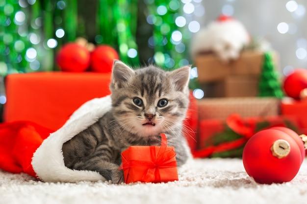 Рождественский кот с забавным лицом в шляпе санта-клауса, держа подарочную коробку под елкой.