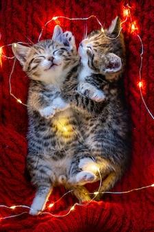 クリスマスの猫。赤い背景で眠っている2匹のかわいい小さな縞模様の子猫。クリスマスのキティ