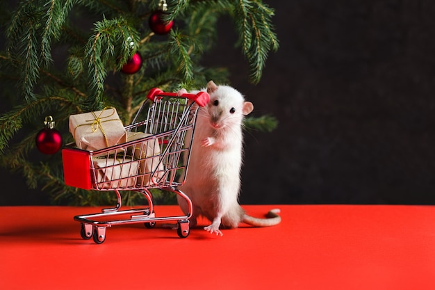Christmas composition with a real rat. a rat near a christmas tree with toys holds a trolley with gifts after shopping