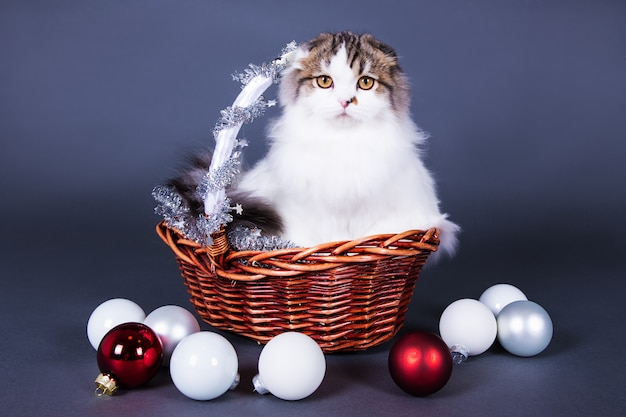 Christmas concept  british cat sitting in basket with christmas decorations over grey background