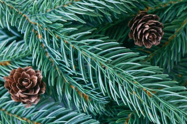 Christmas decoration background with pine leaves, pine cones in top view flat lay with copy space for fill text. christmas tree wallpaper for card or other design in xmas concept.