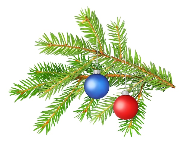 Christmas decoration, fir tree branch with colorful balls isolated on white surface
