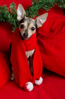 Christmas dog toy terrier with big ears in red scarf