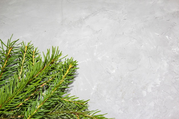 Christmas evergreen spruce tree on gray texture background christmas decoration green fir tree