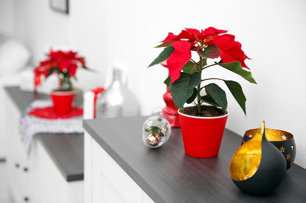 Christmas flower poinsettia and decorations on shelf with christmas decorations,
