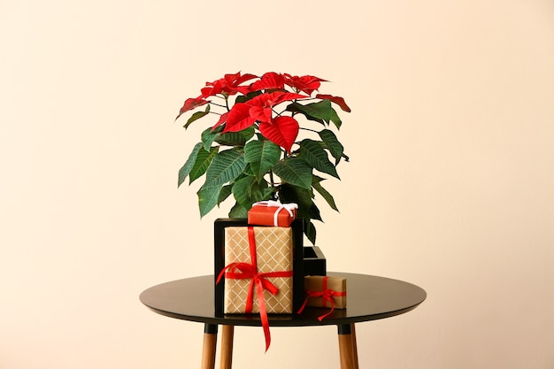 Christmas flower poinsettia and gifts on table against color