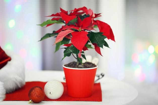 休日のインテリアの背景にクリスマスの花ポインセチア