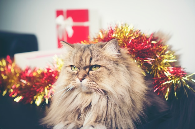 Christmas gifts with persian cats, vintage filter image