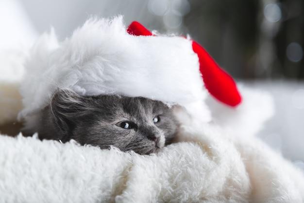 Рождественский серый пушистый котенок в портрете шляпы санта-клауса на мягком пушистом белом пледе. рождество серый новогодний кот расслабиться на белом фоне с копией пространства.
