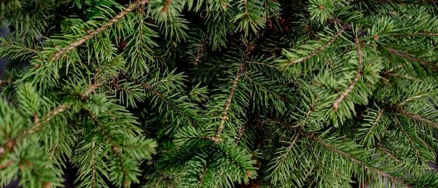 モミの枝のクリスマスの緑の背景。テキスト、テンプレート、空白のバナー。